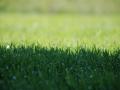 Rasen, Detail Gras