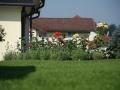Rasen, Rosenbeet mit Lavendelhecke als Vorpflanzung, Beetabgrenzung zur Terrasse dahinter