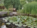 Wasser im Garten, Biotop, Seerosen