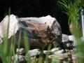 Wasser im Garten, Quellstein an Biotop