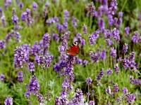 Pflanzung und Tiere fühlen sich in DSG Gärten wohl...