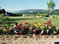 Sonnenplatz für Rosenbeet und neugepflanzten Lavendel