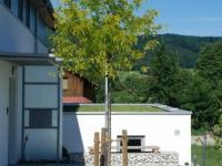 Baumpflanzung mit Gräsern, Eingangsbereich