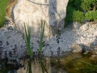 Weissenbacher-Findling am Teich