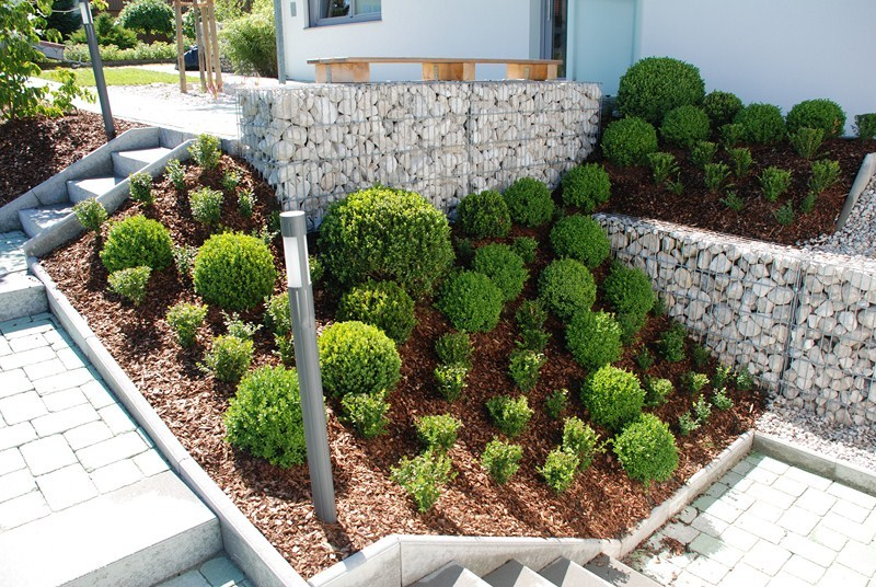 Buchsbaumbeet mit Rindenmulch als Bodenabdeckung