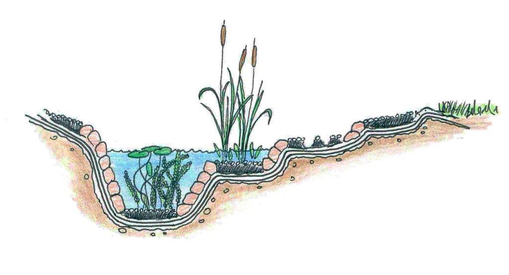 Skizze von Biotopbau, die Bepflanzung
