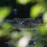 Biotop, Wasser im Garten