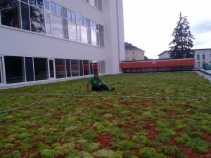 Michael Martan, Dachbegrünungsprofi inmitten einer extensiven Dachanlage