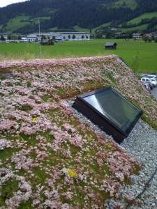 nicht nur Flachdächer lassen sich begrünen, extensive Dachbegrünung
