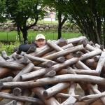 Sperr Reinhard versteckt sich im Kletterholz