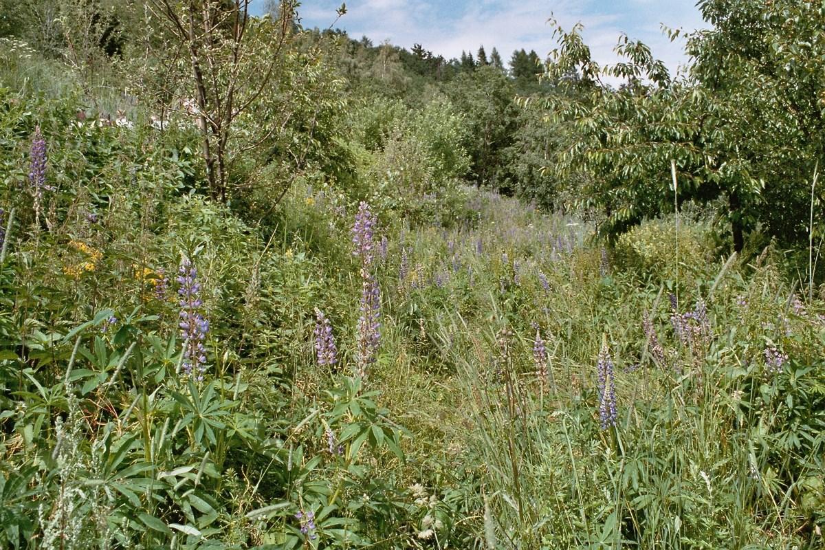 Die blumenwiese gegenst ck zum rasen in der for Gartengestaltung rasen