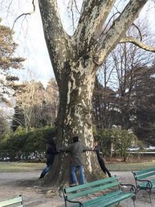 Wieviele Service Gärtner braucht man um eine Platane zu umarmen?