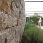 Natursteinmauer, Kräuter als Vorpflanzung