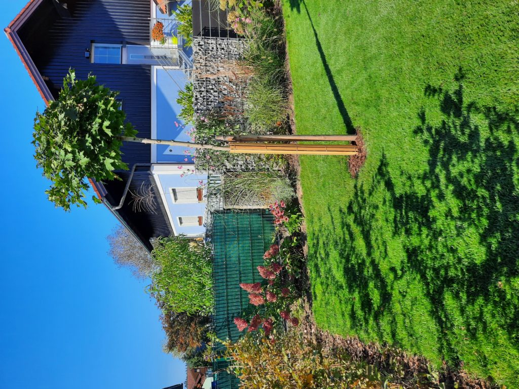Rasen, Rispenhortensie und Gräser, Kugelahorn